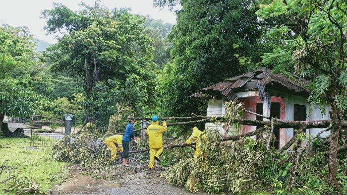 Pohon Tumbang Tutup Jalan Menuju Wisata Air Terjun Suhom Lhoong Dan Halte Trans Kutaraja Di Mata Ie Serambi Indonesia