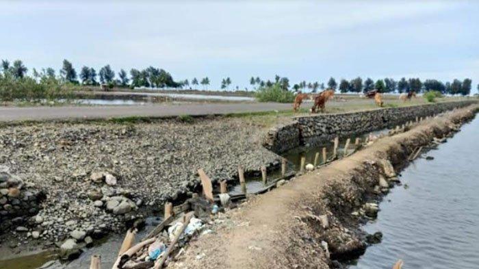 Ribuan Hektare Tambak di Pidie Rusak, Petani Kian Susah Budidaya Udang