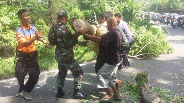Dihadang Pohon Tumbang, Jalan Lintas Tapaktuan-Blangpidie Sempat Tertutup