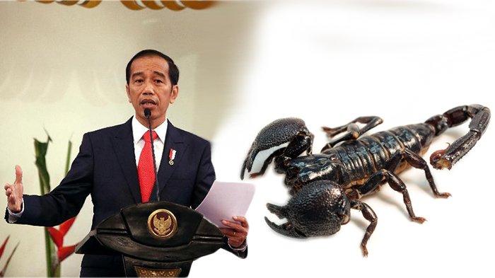 Terkait Pidato Jokowi Soal Racun Kalajengking, Warganet Ramai Cari-cari Info, Ini yang Didapat