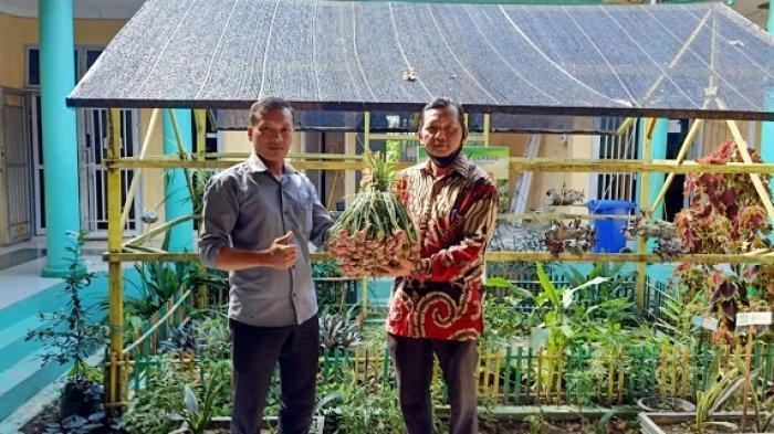 Lebih Irit Dibanding Sistem Konvensional, Aceh Tamiang Berhasil Kembangkan Bawang TSS
