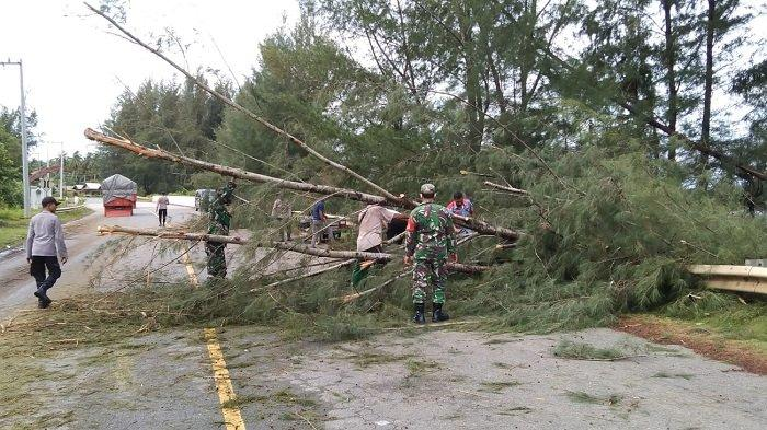 Personel Kodim 0114 Aceh Jaya Bersihkan Pohon Tumbang