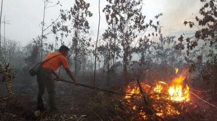 Sudah 3 Minggu Kebakaran Ribuan Hektar Lahan Gambut di Riau, Tim Gabungan Terus Padamkan Api