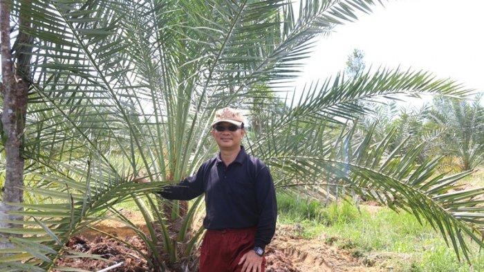 Menengok Hamparan Kebun Kurma Pak Edi di Longkib Kota Subulussalam