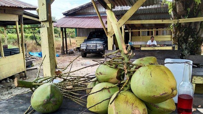 Permintaan Kelapa Muda di Aceh Singkil Meningkat Meski Harganya Mahal, Ternyata Ini Penyebabnya