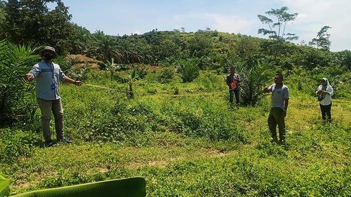 Tim Verifikator Uji Kualitas Kebun Sawit PSR Aceh Tamiang