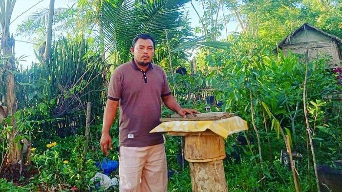 Penangkar Lebah Kelulut di Aceh Utara Ini, Miliki Omzet Hingga Belasan Juta Rupiah Setiap Bulan