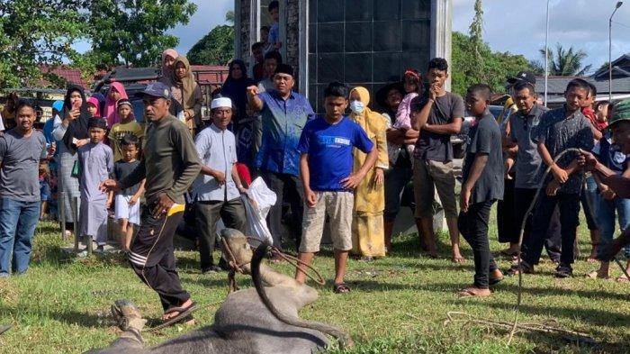 Persediaan Hewan Kurban di Banda Aceh Aman Mencapai 1.953 ekor