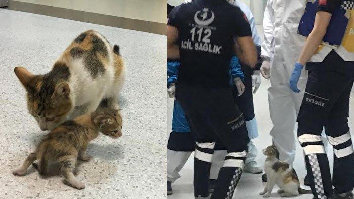 Viral, Induk Kucing Ini Gendong Anaknya yang Sakit Minta Pertolongan Dokter di UGD Rumah Sakit