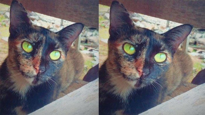 PERINGATAN Ilmuwan: Kucing Rentan terhadap Covid-19, Perlu Diisolasi Jika Pemiliknya Positif Corona