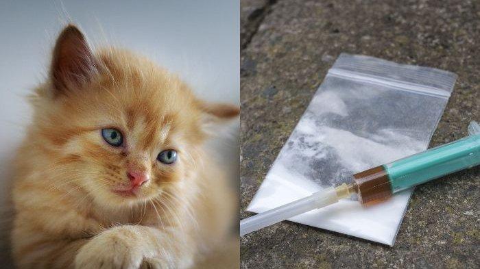 Selundup Narkoba ke Sel Tahanan, Kucing Ini Dijeblos ke Penjara, Berhasil Kabur Walau Dijaga Ketat