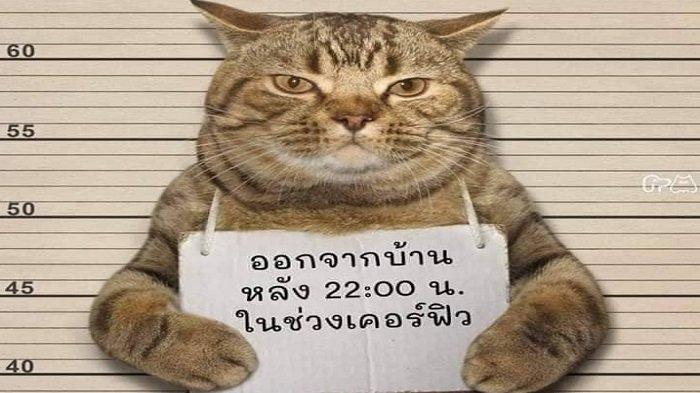 Seekor Kucing di Thailand Ditangkap Polisi Karena Langgar Aturan Lockdown - kucingtsk.jpg