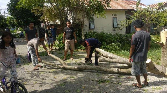 Pohon Tumbang di Payatieng Peukan Bada Timpa Kabel Listrik
