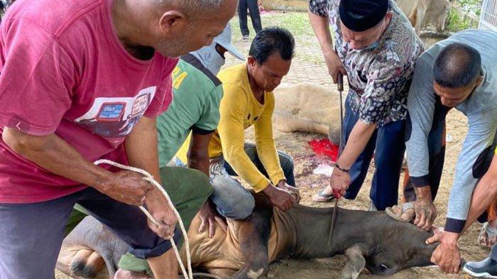 Proses penyembelihan hewan kurban di Gampong Geuceu Komplek, Kota Banda Aceh, Senin (20/7/2021).