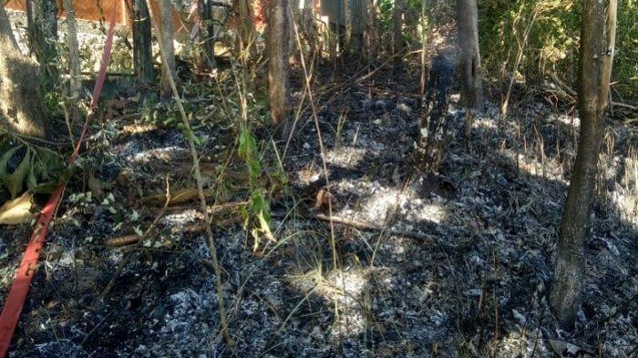 2 Ha Lahan Komplek Bapelkes Terbakar
