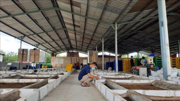 Mengubah Sampah Organik Menjadi Pakan Ternak, Solusi Atasi Penumpukan Sampah