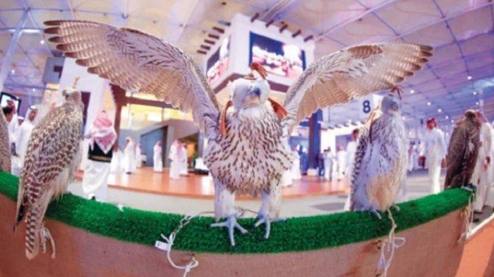 Saudi Falcons Club Luncurkan Lelang Kedua Burung Elang Mulai 1 Oktober 2021