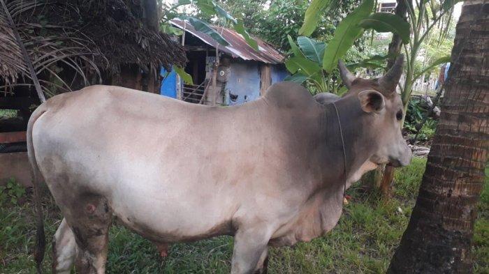 Dinas Pendidikan dan Kebudayaan Kota Banda Aceh Akan Sembelih 102 Hewan Kurban pada Idul Adha 1442 H