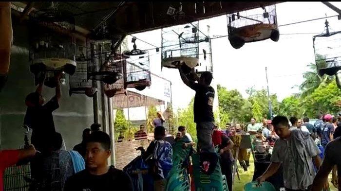 Pecinta Burung Se Aceh Ikut Lomba Burung Berkicau di Bireuen