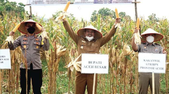 Bupati Aceh Besar Panen Jagung di Lamteuba