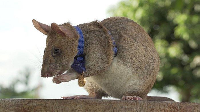 Cara Mengusir Hewan dan Serangga, Termasuk Tikus, Semut, Ular, hingga Kecoak