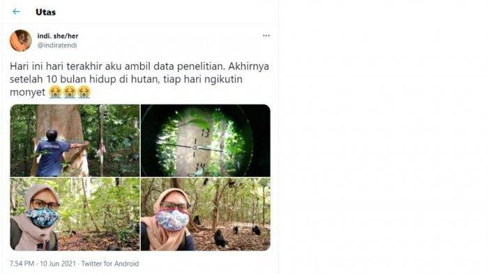 Tangkapan layar cuitan pemilik akun @indiratendi saat sedang melakukan penelitian tentang Monyet Yaki di Cagar Alam Tangkoko, Sulawesi Utara