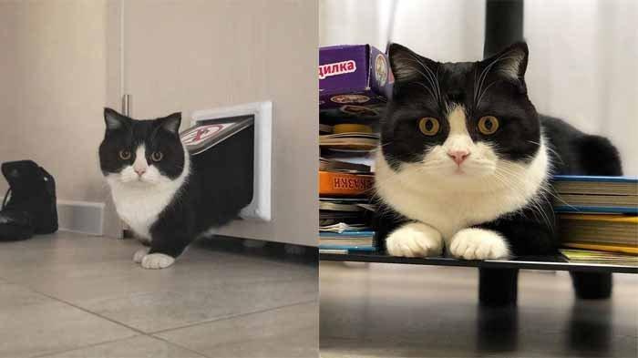 Lihat Kucing Suka Menjilat Sesuatu Mulai Anaknya Hingga Anda, Ternyata Ini 4 Alasannya