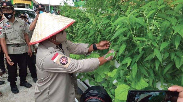 SDN 37 Lakukan Penghijauan dengan Sayuran Hidroponik