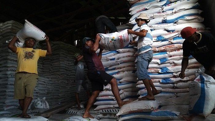 PT Meuligoe Raya Salurkan 103 Ton Pupuk Bersubsidi di Abdya, Kelangkaan Mulai Teratasi