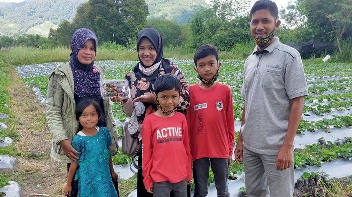 Wisata Kebun Stroberi Bener Meriah, Berastaginya Aceh