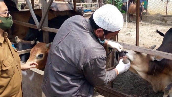 DKPP Lhokseumawe Datangi Sejumlah Tempat Penjualan Hewan Kurban, Ini yang Dilakukan