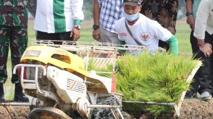 APBA 2021 Biayai Program Tanam Padi IP 300 di Lahan Seluas 3.800 Hektar di Aceh