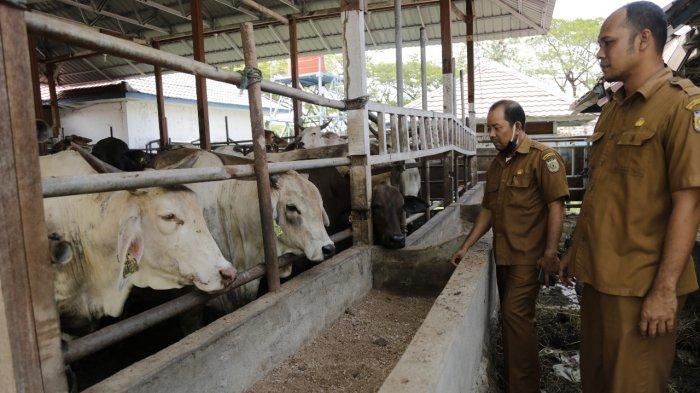 Persediaan Daging untuk Meugang Ramadhan di Kota Banda Aceh Dipastikan Cukup