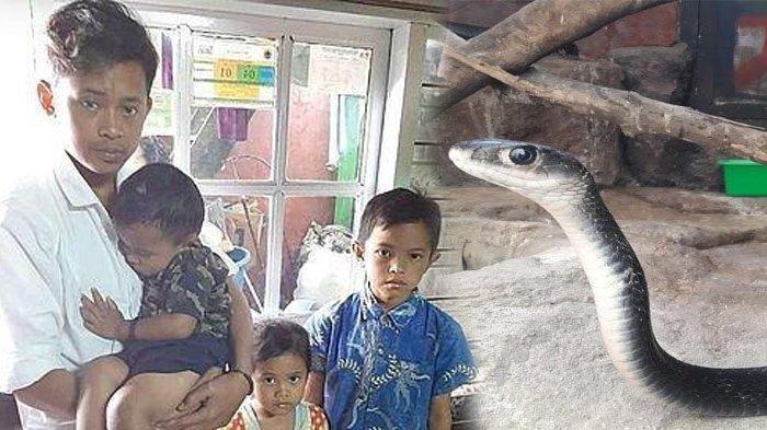 Ayah dan Ibunya Meninggal Digigit Ular, 4 Anak Ini Harus Jadi Yatim Piatu, Bupati Beri Bantuan