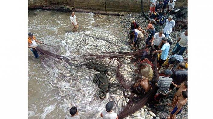 Kawanan Ikan Kuwe Datang Lagi Ke Aceh Selatan, Kali Ini Nelayan Panen 6 Ton Ikan Pakai Pukat Darat