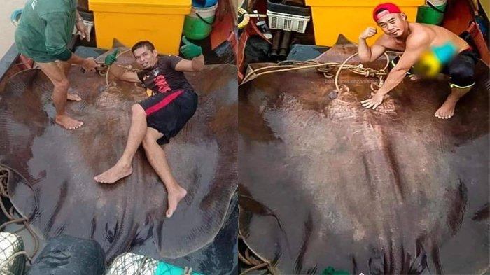 Nelayan Ini Dapat Ikan Pari Raksasa Seberat 280 Kilogram, Begini Cara Menaklukkannya