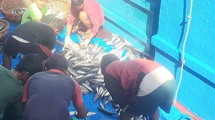Harga Ikan Masih Mahal, baby tuna dilelang Rp 35.000/kg