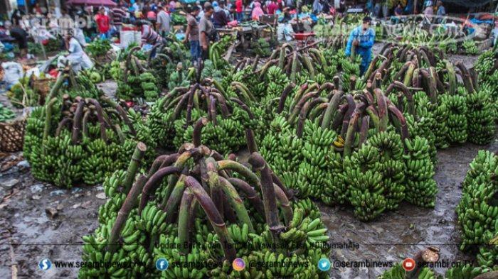 FOTO - Wajah Pasar Induk Lambaro Ketika Musim Hujan, Pedagang Berjualan Diantara Kubangan Lumpur - pedagang-pisang-mempersiapkan-dagangannya.jpg