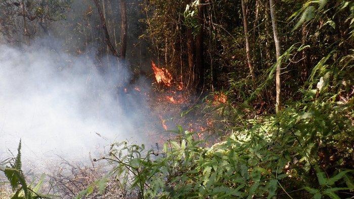 Walhi Aceh Minta KLHK untuk Mencabut IUPHKm KSU Putera Selatan Kluet di Aceh Tenggara