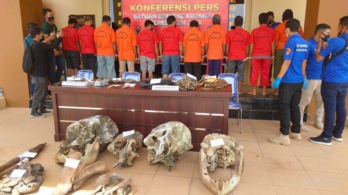 Polres Aceh Jaya Tangkap 11 Terduga Pelaku Pembunuh 5 Ekor Gajah