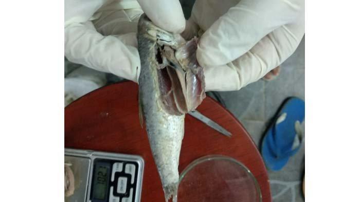 Ikan Teri Berhamburan di Pantai Gampong Jawa, Ini Kesimpulan Hasil Peneliti Unsyiah