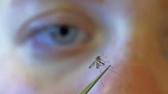 5 Bahan Alami Ini Bisa Menghilangkan Bekas Gigitan Nyamuk yang Menghitam, Berikut Cara Pemakaiannya