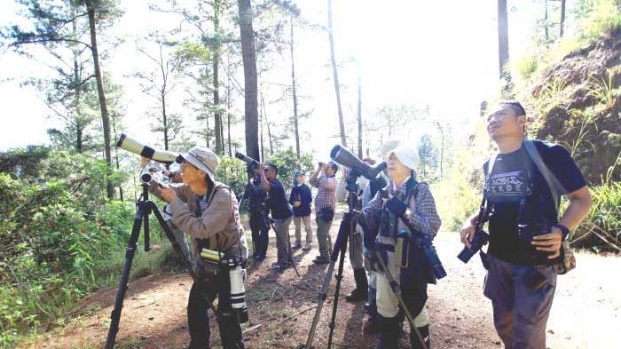 Wisatawan Jepang Teliti Burung Gayo