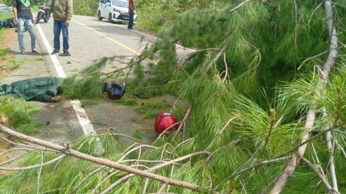 Nahas! Pengendara Motor Tewas Usai Pulang Antar Pengantin, Tertimpa Pohon Tumbang Saat Melintas