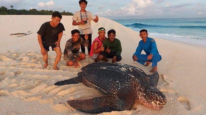 Pulau Terluar di Simeulue Jadi Lokasi Konservasi Penyu