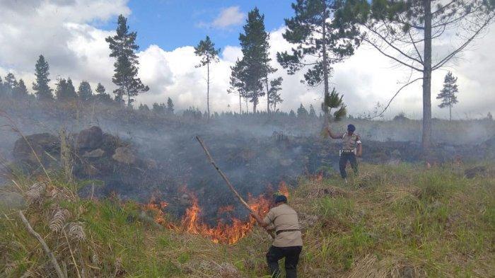 Dalam UU Cipta Kerja, Pelanggaran di Kawasan Hutan Dikenakan Sanksi Administratif