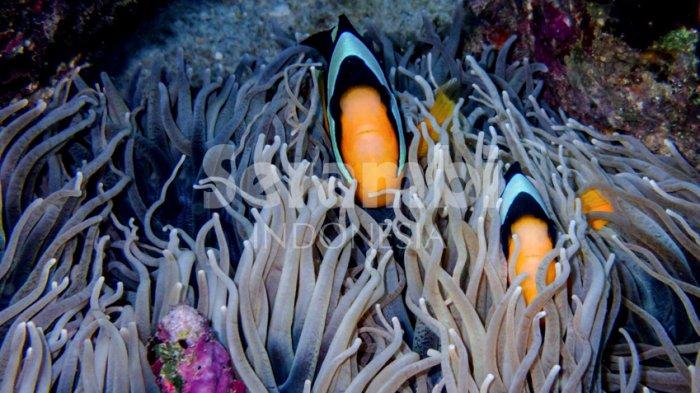 DKP Maksimalkan Patroli Laut, Cegah Kerusakan Terumbu Karang