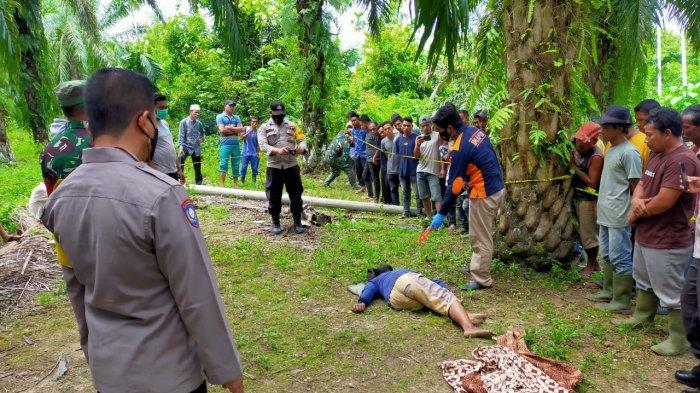 Dok Polres Aceh Timur Supangat (65) warga Desa Beurandang ditemukan meninggal dunia di kebun sawit kawasan Desa Cek Mbon, Kecamatan Peureulak, Aceh Timur, Minggu (20/6/2021).
