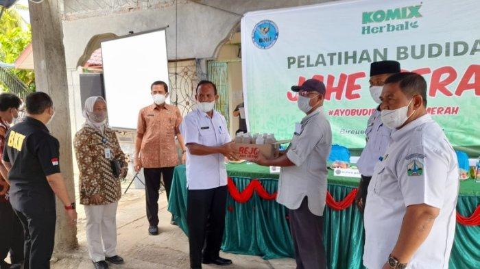 100 Petani di Bireuen Dapat Bantuan 500 Kg BibitJahe Merah dari BNNK, Panen Nanti Ditampung Komix