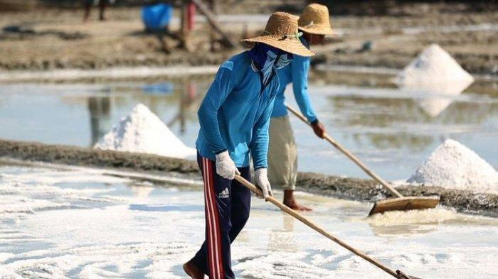 Ini Daftar Negara yang Jadi Langganan Indonesia Impor Garam